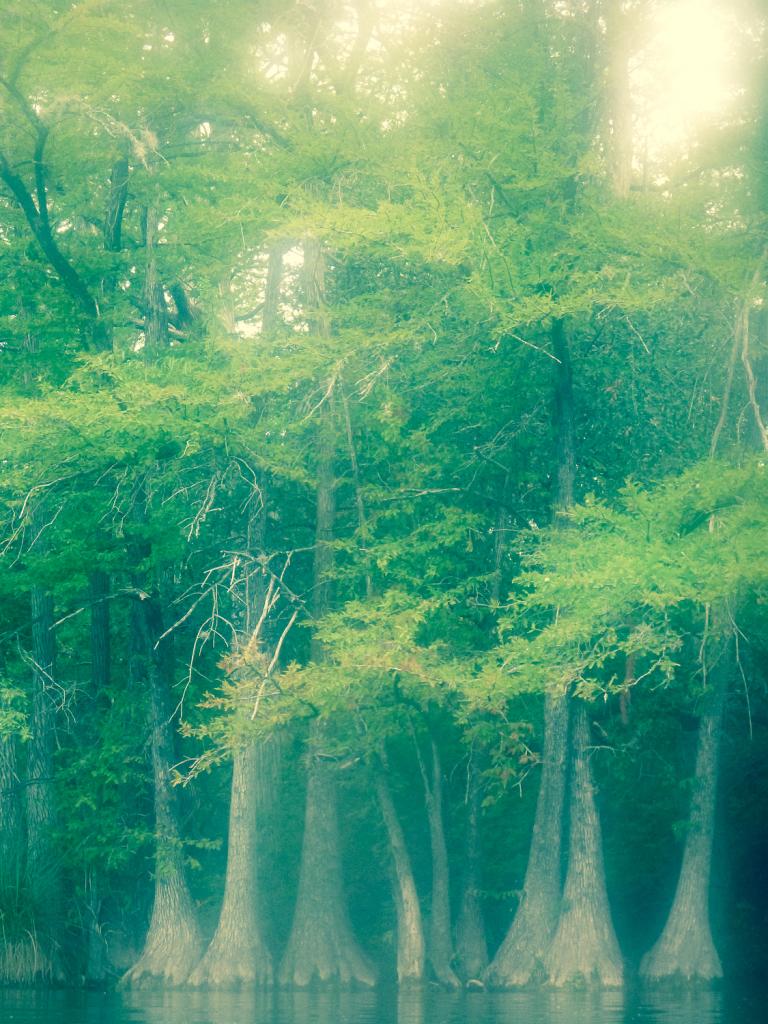 Garner State Park Trees