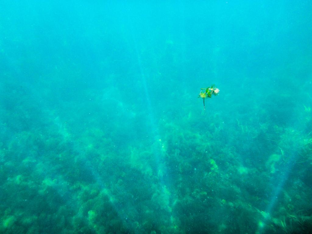Underwater Leaf